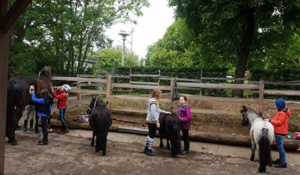 Kinder putzen Ponys